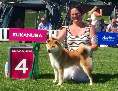 NKK Drammen : Tetsuya Go Koshiwasou, BIG 4 av en fullsatt gruppe 5 med 34 deltagende raser. Gruppedommer: Monika Blaha