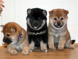 Mushu, Loke og Anton