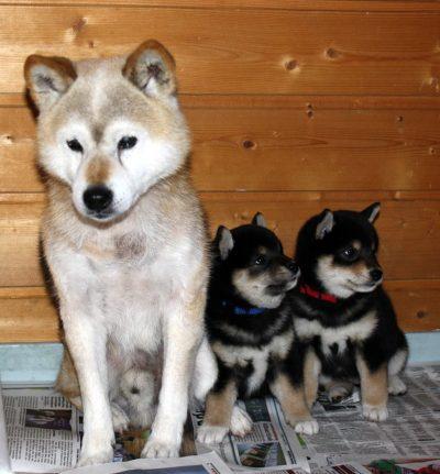 Sacho og hans 2 første oldebarn, Cashew og Otto