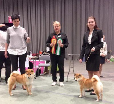 Yuuwa og Kristine ble BIM valp på Norsk vinner-17