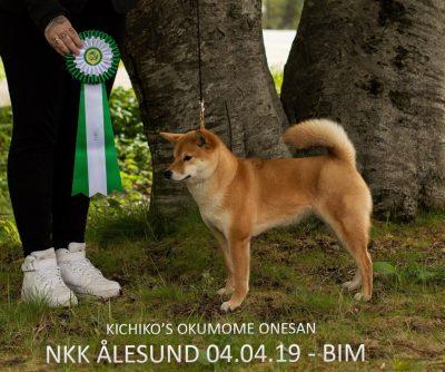 BIM, NKK Ålesund